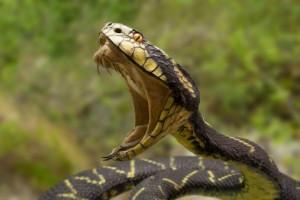 Venom bug snake